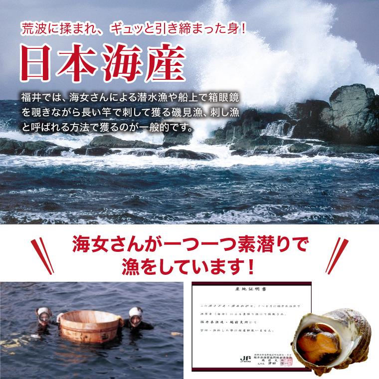 活さざえ1.0kg海女漁