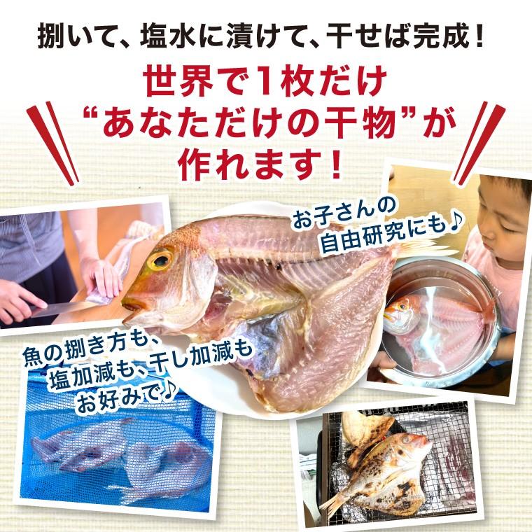 鮮魚-あなただけの干物