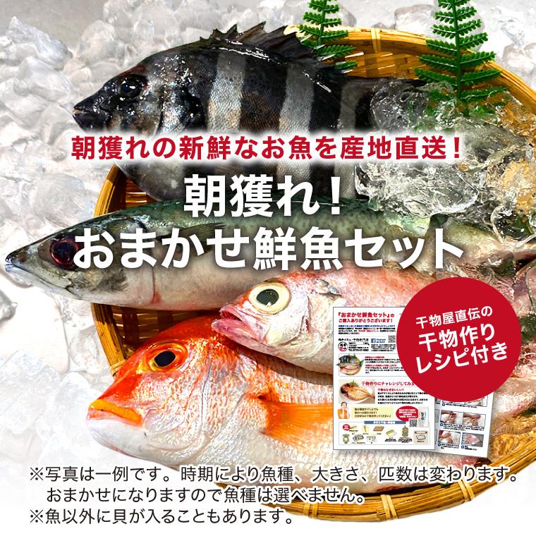 鮮魚-干物づくりセット