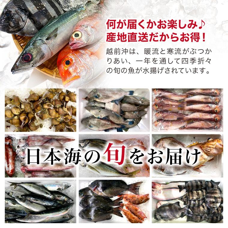 鮮魚-日本海の旬