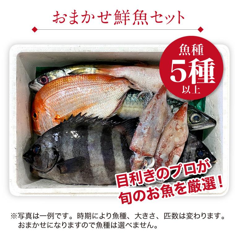 鮮魚-セット内容